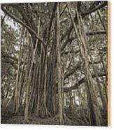 Old Banyan Tree Wood Print by Adam Romanowicz