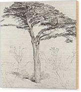 Old Cedar Tree In Botanic Garden Chelsea Wood Print by Samuel Palmer