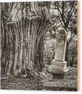Old Friends Wood Print by Scott Norris