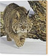 On The Prowl Wood Print by Jack Milchanowski