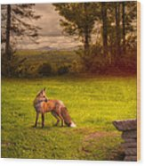 One Red Fox Wood Print by Bob Orsillo