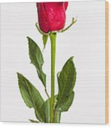 One Red Rose Wood Print by Adam Romanowicz