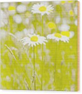 Oopsy Daisy Wood Print by Artist and Photographer Laura Wrede