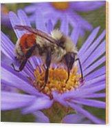 Orange-banded Bee Wood Print by Rona Black