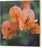 Orange Bougainvillea Wood Print by Rona Black