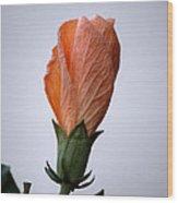 Orange Hibiscus Lax 3 Wood Print by Deborah Smolinske