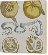 Oranges Wood Print by Cornelis Bloemaert