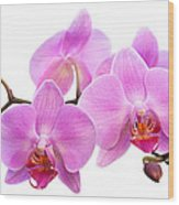 Orchid Flowers II - Pink Wood Print by Natalie Kinnear