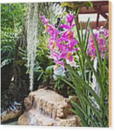 Orchid Garden Wood Print by Carey Chen