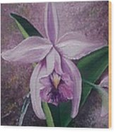 Orchid Lalia Wood Print by Karin  Dawn Kelshall- Best