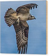 Osprey Flying Away Wood Print by Robert Bales