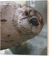 Otter Be Lookin' At You Kid Wood Print by John Haldane