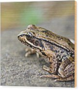 Pacific Tree Frog On A Rock Wood Print by David Gn