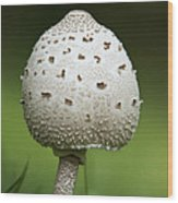 Parasol Mushroom Wood Print by Christina Rollo
