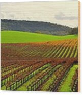 Pastoral Vineyards Of Asti Wood Print by Antonia Citrino