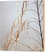 Peaceful Morning Wood Print by Carol Groenen