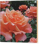 Peach Roses Wood Print by Rona Black