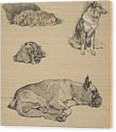 Peke, Collie, Spaniel And German Boxer Wood Print by Cecil Charles Windsor Aldin