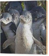 Penguins Wood Print by Steven Ralser
