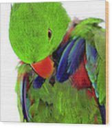 Perfect Bird Wood Print by Crystal Wightman