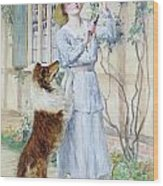 Picking Roses Wood Print by William Henry Margetson