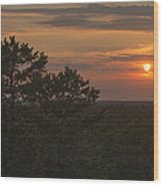 Pine Barrens Sunset Nj Wood Print by Terry DeLuco