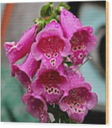 Pink Foxglove Wood Print by Karon Melillo DeVega