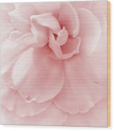 Pink Ruffled Begonia Flower Wood Print by Jennie Marie Schell