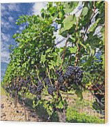 Pinot Noir Grapes In Niagara Wood Print by Charline Xia