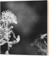 Pinwheels Wood Print by Barbara Shallue