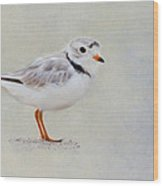 Piping Plover Wood Print by Bill Wakeley