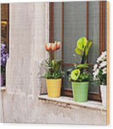 Potted Flowers 02 Wood Print by Rick Piper Photography