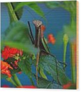 Praying Mantis Wood Print by Raymond Salani III