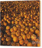 Pumpkins Wood Print by Ron Sanford