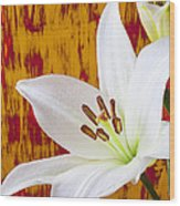 Pure White Lily Wood Print by Garry Gay