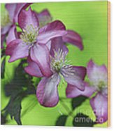 Purple Clematis Wood Print by Sylvia Cook