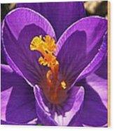 Purple Crocus Detail Wood Print by Chris Berry