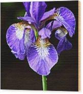 Purple Iris Wood Print by Adam Romanowicz