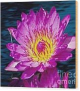 Purple Lily On The Water Wood Print by Nick Zelinsky