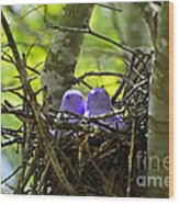 Purple Peeps Pair Wood Print by Al Powell Photography USA