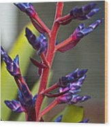 Purple Spike Bromeliad Wood Print by Sharon Cummings
