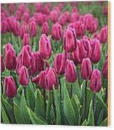 Purple Tulips Wood Print by Inge Johnsson