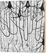 Pyramidal Cells Illustrated By Cajal Wood Print by Science Source