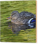 Quack Wood Print by Sharon Talson