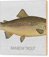 Rainbow Trout Wood Print by Aged Pixel