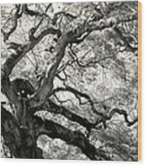 Reaching For Heaven Wood Print by Karen Wiles