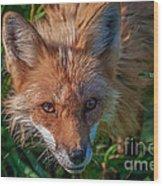 Red Fox Wood Print by Bianca Nadeau