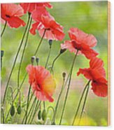 Red Poppies Wood Print by FunCards