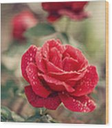 Red Rose After Rain Wood Print by Diana Kraleva