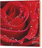 Red Rose Wood Print by Elena Elisseeva
